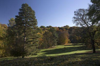 Deer Park in autumn