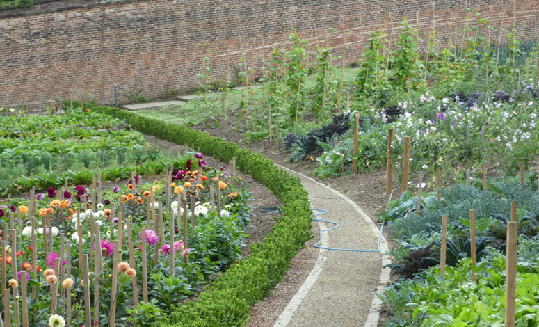 Flowers and vegetables growing in the Walled Garden