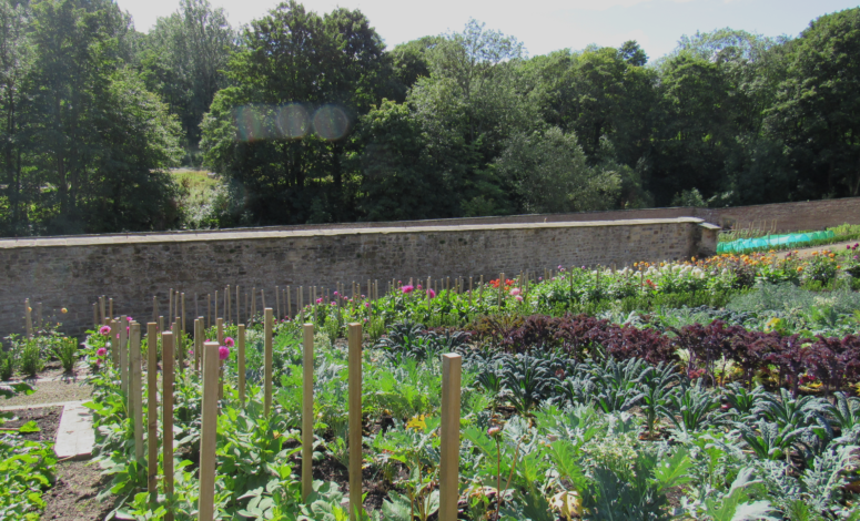 Walled Garden 50pc Tint